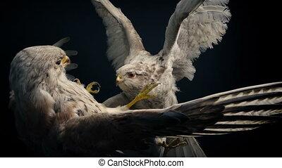 dier, vecht, display, prooi, volgestopt, vogels