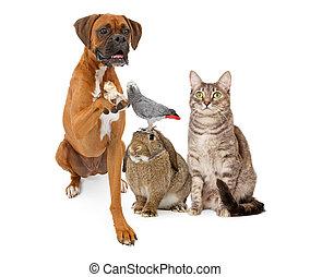 dometic, groep, huisdieren, samen, zittende