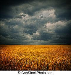 donkere wolken, op, weit veld