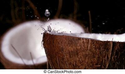 dons, het regenen, water, cocosnoot, bl