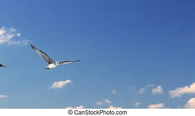 door, blauwe , het stijgen, hemel, zee vogel