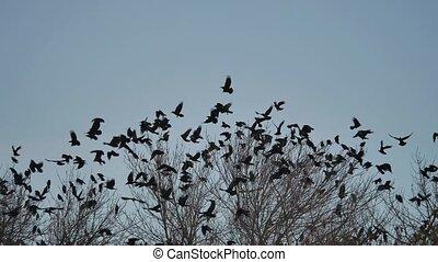 dor ervandoor, boompje, boeiend, boompje, vogels, kraaien, black , vlucht, vogel