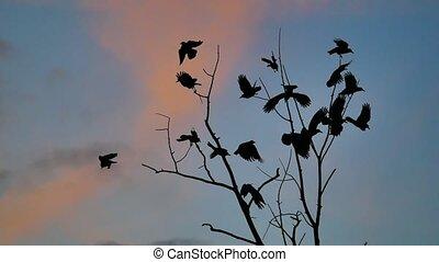 dor ervandoor, boompje, boeiend, hemel, vogels, herfst, kraaien, boom., black , sinaasappel, silhouette, vlucht, ravens, ondergaande zon , vogel