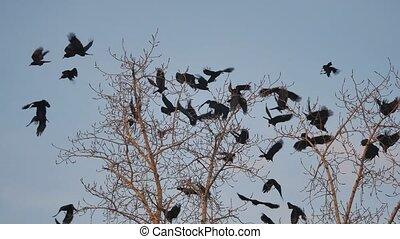 dor ervandoor, boompje, boeiend, hemel, vogels, herfst, kraaien, boom., black , vlucht, ravens, vogel