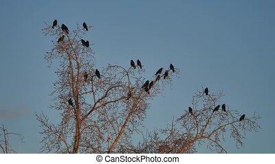 dor ervandoor, boompje, boeiend, hemel, vogels, kraaien, boom., black , vlucht, ravens, vogel