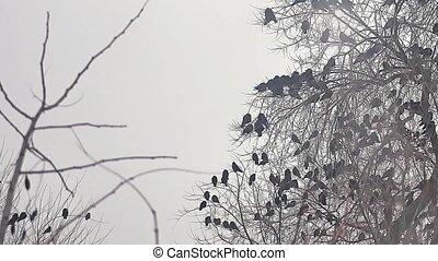 dor ervandoor, boompje, kraai, boeiend, boompje, vogels, kraaien, black , vlucht, vogel