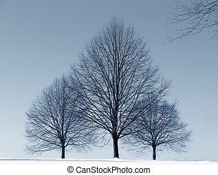 drie, bomen