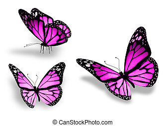drie, vrijstaand, achtergrond, viooltje, witte , vlinder