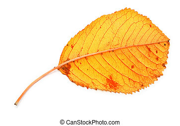 droog, blad, gele, herfst