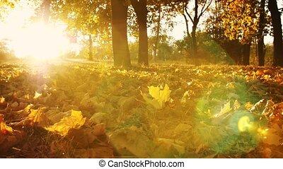 droog, bladeren, grond, herfst, park