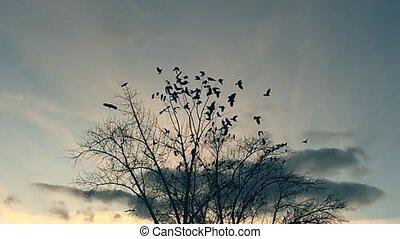 droog, vertragen, van, boompje, boeiend, hemel, vogels, motie, kraaien, boom., black , vlucht, ravens, vogel