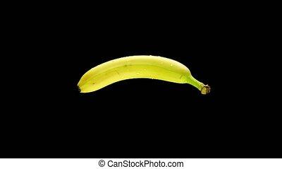 druppels, vrijstaand, radvormigen, black , water, nat, banaan, achtergrond