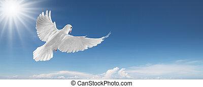 duif, wite hemel