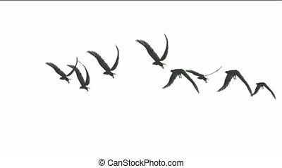 eagle., vlieg, vlucht, vogels, op
