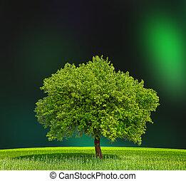 eco, groene, zone