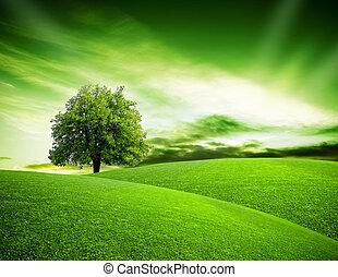 eco, planeet, groene