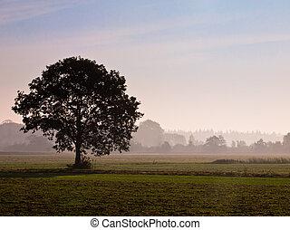 eenzaam, boompje, morgen, landbouwkundig, gedurende, mist, landscape