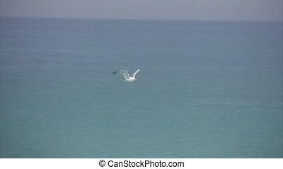 eenzaam, boven, vliegen, zee, witte , seagul