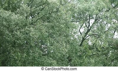 eik, wind, bomen