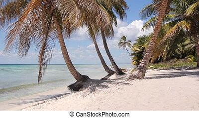 eiland, shoreline., woestijn