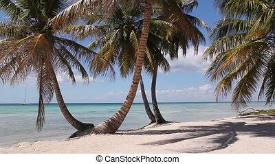eiland, strand., woestijn