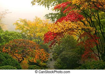 esdoorn, japanner, bomen, herfst