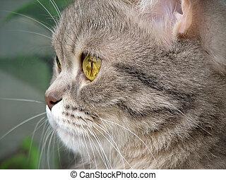 eyes, op, beeld, twee, kat, poezen, afsluiten