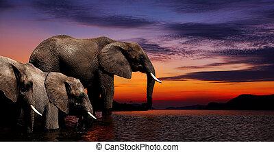 fantasie, elefant