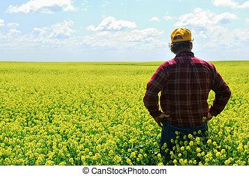 farmer, oogst, canola