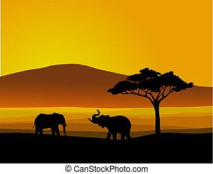 fauna, afrika