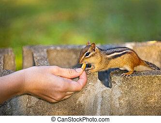 fauna, het voeden