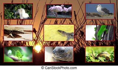 fauna, samenstelling