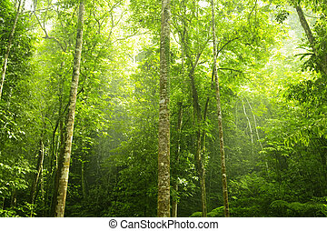 forest., groene