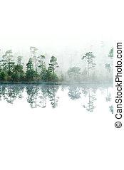 forest., op, vrijstaand, oppervlakte, morgen, lake., taiga, mist, water., tranquil, dons