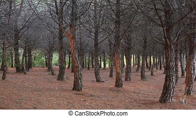 forest., wild