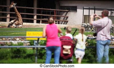 foto's, gezin, rusten, dierentuin, giraffe, nemen, hebben