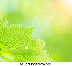 fris, bladeren, groen boom