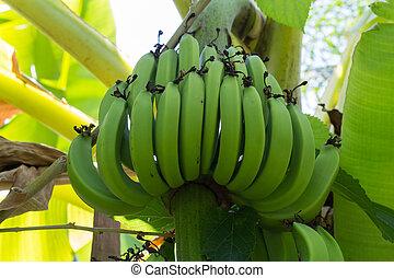 fruit, banaan