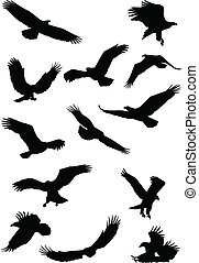 fying, adelaar silhouette, vogel