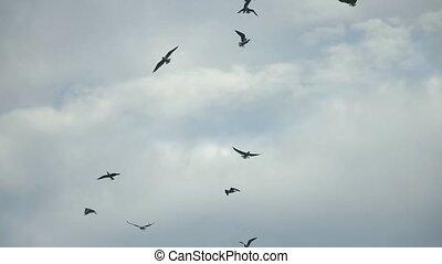 gealarmeerde, hemel, vogels