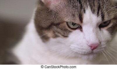 gekke , het voeden, het verorberen, cat., hand, vrouw, afsluiten, kat, chewing.