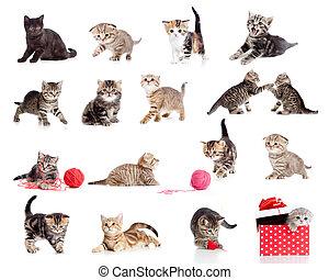 gekke , weinig; niet zo(veel), katjes, collection., vrijstaand, poezen, white., schattige