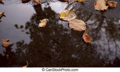 gele, gevallen, autumn leaves, plas