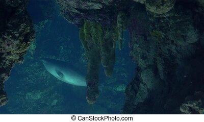 genua, zwemmen, u, aquarium, zegels