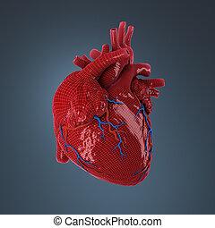 gereproduceerd, heart., menselijk, 3d