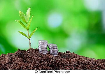germinated, plant, seedlings, ground., jonge