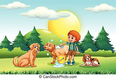 geven, bad, honden, jongen, park