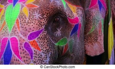 geverfde, de mening van de close-up, elefant