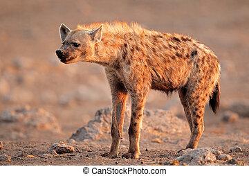 gevlekt hyena