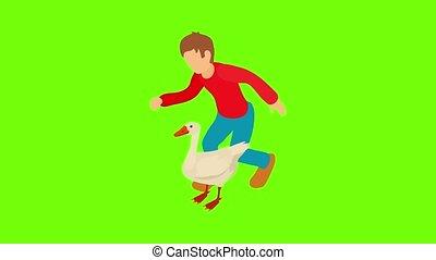gevogelte, pictogram, landbouw, animatie